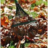 Lawn Care: Autumn Lawn Care